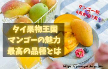 マンゴー タイで買うといくら?日本人に最も人気なタイのフルーツについて